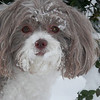 Chloe loves the snow!!<br /> <br /> Photographer's Name: Jama Jameson<br /> Photographer's City and State: Anderson, IN