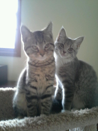 mia and london looking cute!!!!<br /> <br /> Photographer's Name: sheelah schmidt<br /> Photographer's City and State: anderson, IN