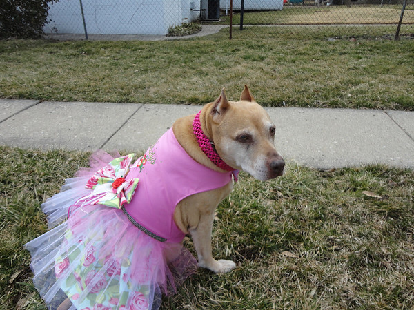 Gladys posing in her new Easter dress.<br /> <br /> Photographer's Name: Donna Wharton<br /> Photographer's City and State: Anderson, Ind.