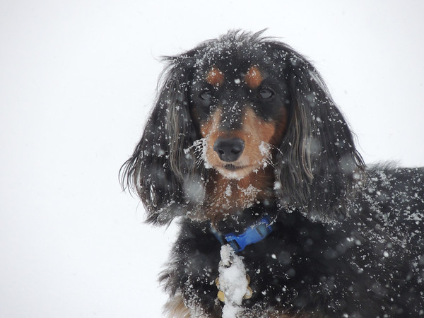 """""""I can't believe it's snowing...AGAIN!""""<br /> <br /> Photographer's Name: Lorri Stohler<br /> Photographer's City and State: Markleville, Ind."""