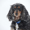 """I can't believe it's snowing...AGAIN!""<br /> <br /> Photographer's Name: Lorri Stohler<br /> Photographer's City and State: Markleville, Ind."