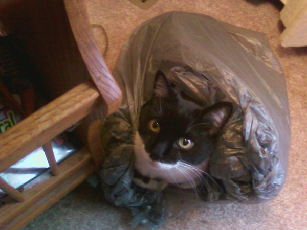 Lucy Metzger, making a nest in some grocery bags<br /> <br /> Photographer's Name: Larry Metzger<br /> Photographer's City and State: Anderson, IN