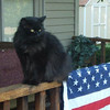 Fluffy sitting on the porch enjoying the sun.<br /> <br /> Photographer's Name: Sheelah Schmidt<br /> Photographer's City and State: Anderson, Ind.