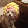Bella Buttercup Frazier waiting to ring in the New Year!<br /> <br /> Photographer's Name: Tammy and Brian Frazier<br /> Photographer's City and State: Anderson, Ind.