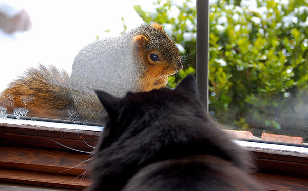 Our cat's new friend.<br /> <br /> Photographer's Name: Ron Crider<br /> Photographer's City and State: Anderson, Ind.
