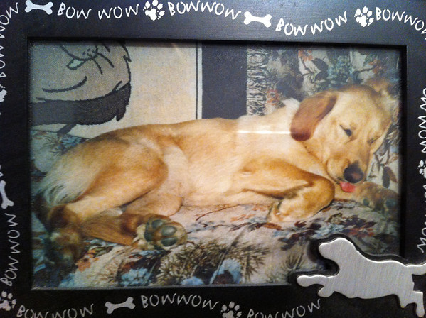 My baby girl, ZADA, when she was a couple years old.  Miss her a lot, had to put her down, Sept. 16, she was 14 yrs old.<br /> <br /> Photographer's Name: Casi Cummins<br /> Photographer's City and State: Alexandria, IN