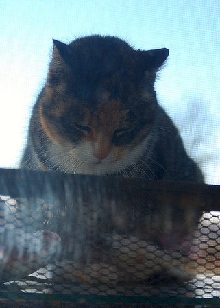 Lazy afternoon nap. My barn kitty Patches loves to sit in the sun on my outdoor table.<br /> <br /> Photographer's Name: Amber Ryder<br /> Photographer's City and State: Daleville, IN