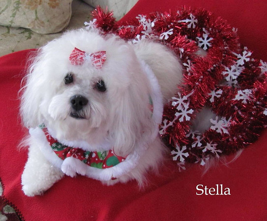 Alexandria resident Mary Lou Stinson uploaded this photo of her dog, Stella, enjoying the holidays.<br /> <br /> Photographer's Name: Mary Lou Stinson<br /> Photographer's City and State: Alexandria, Ind.