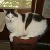 11-year-old Snowball<br /> <br /> Photographer's Name:  <br /> Photographers City and Country: