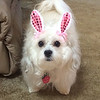 Bunny ears for Stella!<br /> <br /> Photographer's Name: Mary Lou Stinson<br /> Photographer's City and State: Alexandria, IN
