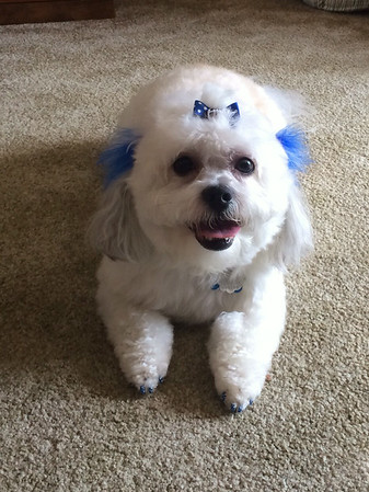 Stella loves the Colts!<br /> <br /> Photographer's Name: Mary Lou Stinson<br /> Photographer's City and State: Alexandria, Ind.