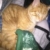 Tabby D Katt, RIP<br /> <br /> Photographer's Name: Jack D. Reynolds<br /> Photographer's City and State: Anderson, Ind.