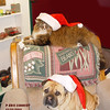 """Merry Christmas from """"Gabby"""" (dog) and """"Chucky"""" (cat)<br /> <br /> Photographer's Name: Eric Schmidt<br /> Photographer's City and State: Alexandria, Ind."""