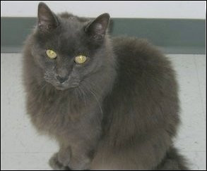 Smokey...she was 14 when she passed....<br /> <br /> Photographer's Name: Paula Hines<br /> Photographer's City and State: Anderson, IN