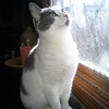 Molly looking at the nice weather!<br /> <br /> Photographer's Name: Sheelah Schmidt<br /> Photographer's City and State: Anderson, Ind.