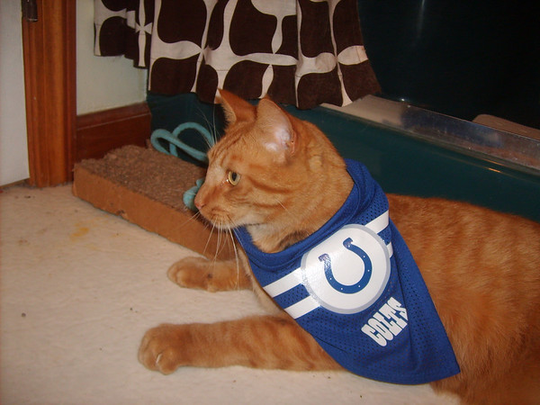 Payton is a Colts fan!<br /> <br /> Photographer's Name: Sheelah Schmidt<br /> Photographer's City and State: Anderson, Ind.