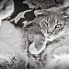Jag, our cat, is truly a character.<br /> <br /> Photographer's Name: Terry Lynn Ayers<br /> Photographer's City and State: Anderson, IN
