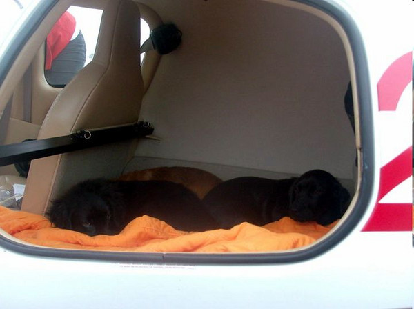 Three of the puppies fell asleep on the blanket before we closed the door.