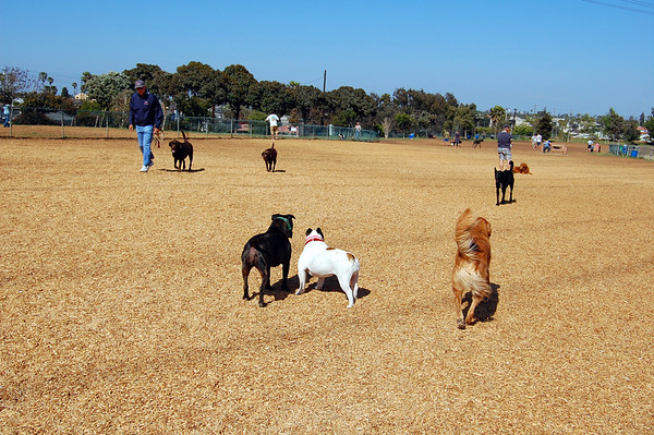 Redondo Beach Dog Park 2009