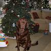 Posing for Christmas - 2002
