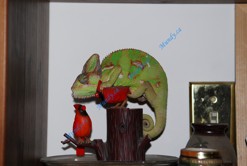 A Cardinal fan I see ...