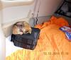 On the flight from Roxboro, NC (KTDF) to Pulaski, VA (KPSK) at 6500 ft, the puppy falls asleep on my flight bag.