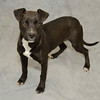 Jewel, 40 lbs<br /> He was secheulde to head to LI, but it was cancelled. (Husband does not want a 2nd dog :( )