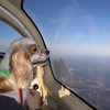 Daisy really liked looking out the windows. Did so most of the flight!