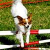 Miami Dog Show Edits-25