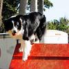 Miami Dog Show Edits-16