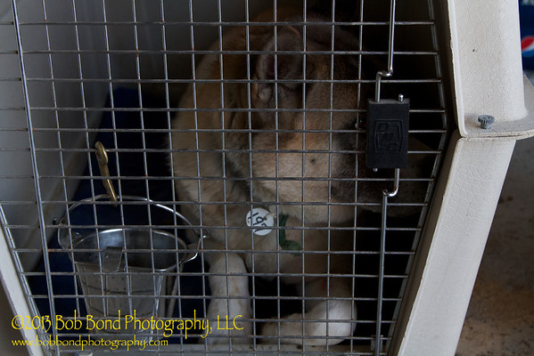 Megumi's first day out of the puppy mill, she got to spend the night with eight Shiba's that were also rescued.
