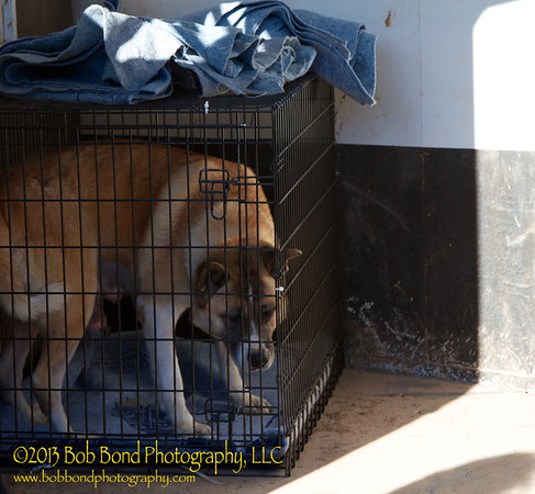 Megumi checking out her new crate, and the horse trailer.