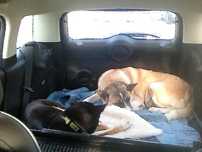 Megumi and Kashi napping in the car