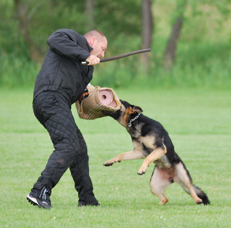 Ika, long bite catch<br /> Fox Valley Police & SchH Club
