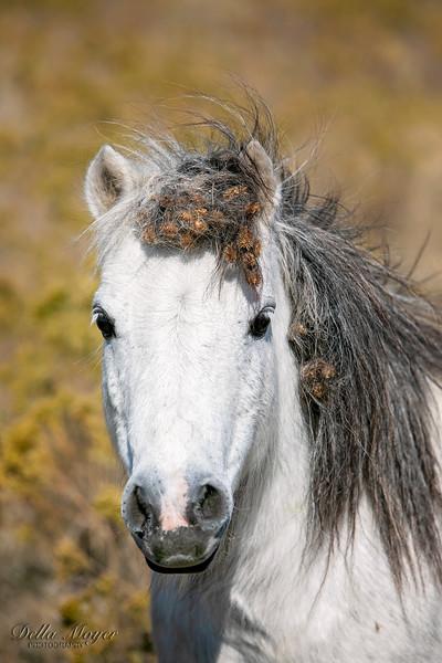 Richardson Horses 2019