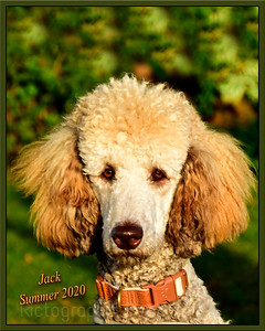 Jack The Poodle, 2020
