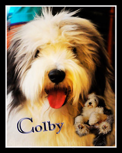 Colby, The Pet Beardy
