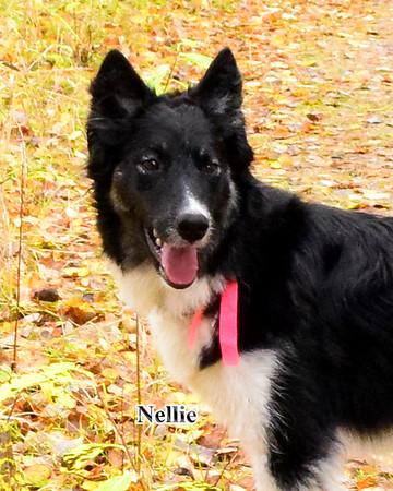 Nellie, 2018