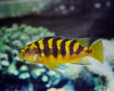 Pet Fish, 44