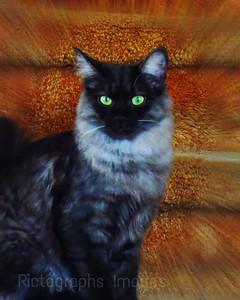 A Pet Cat, 2017