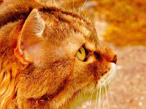 Puddy Cat,