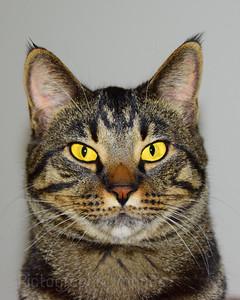 The Cat,