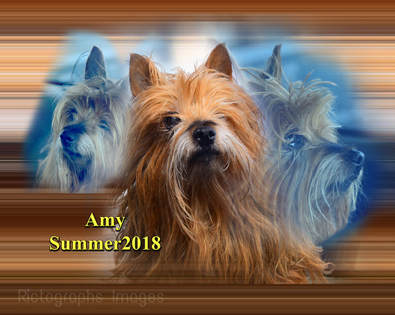Amy The Silke Terrier