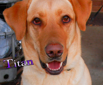 Titan Rescued From The Animal Shelter