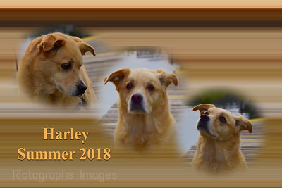 Harley The Great, Summer 2018