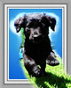 Pet Pup   Rictographs Images