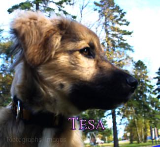 Tesa Puppy