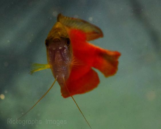 Hi, Fish