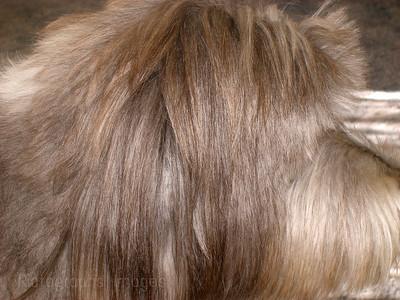 Hair, Hair