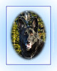Aja The Pet Shepherd